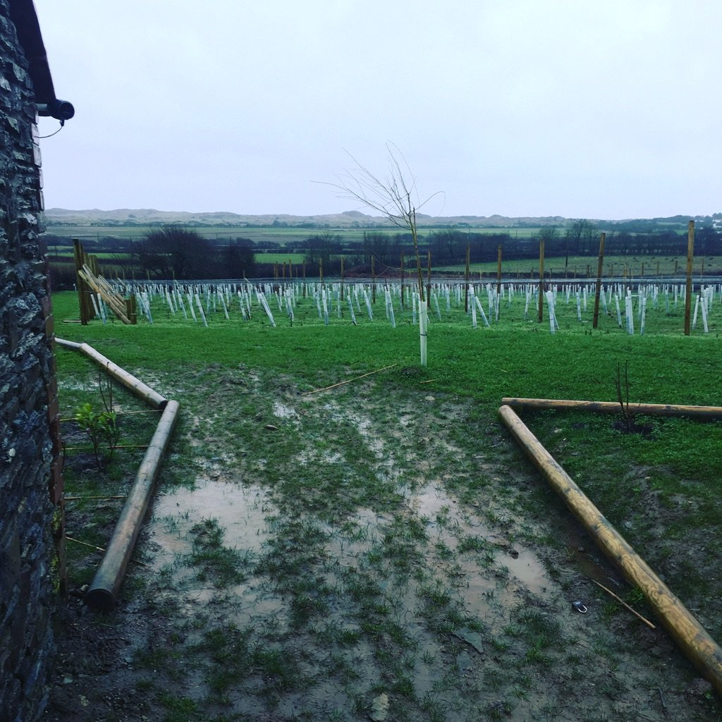 Pruning the vineyard in February