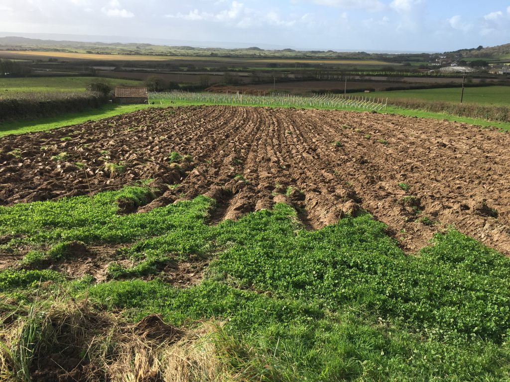 new vineyard ploughed