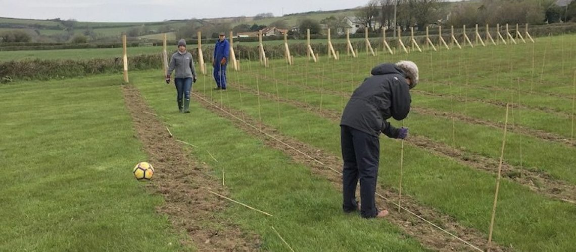 marking out the vineyard before planting the vines